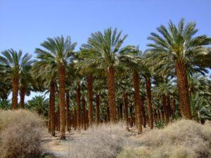 Красота кибуца Эйнг - Геди - Блог про Израиль