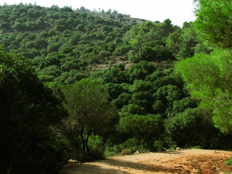 Природа Израиля - Блог про Израиль