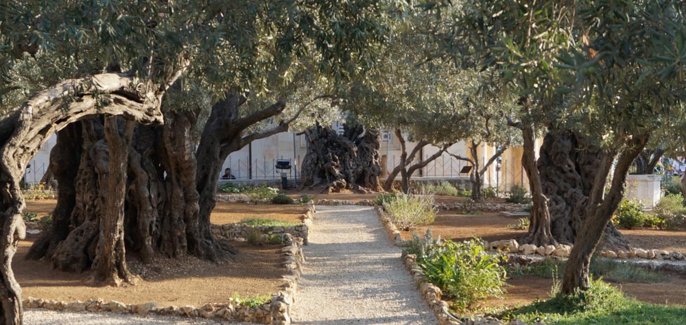 Гефсиманский сад - Блог про Израиль