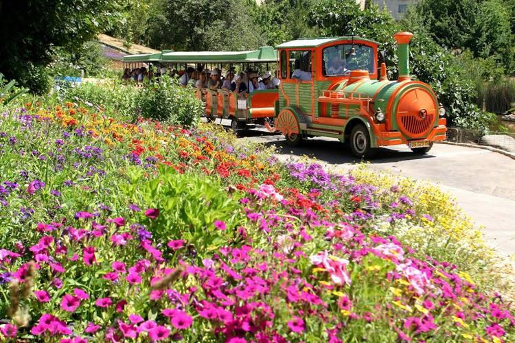 Поезд в саду - Блог про Израиль