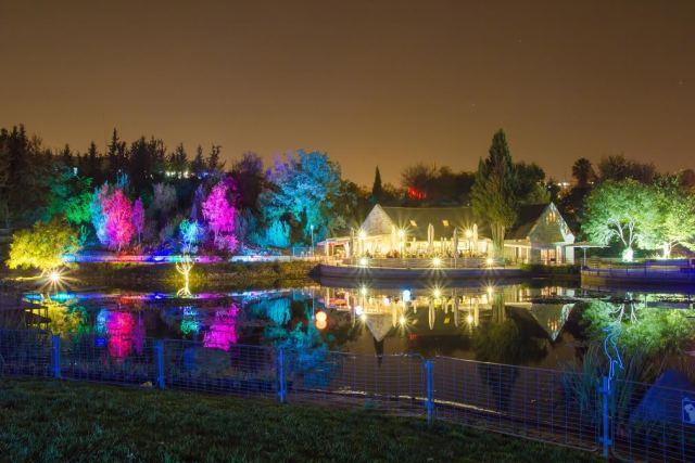 Озеро в Ботаническом саду -Блог про Израиль