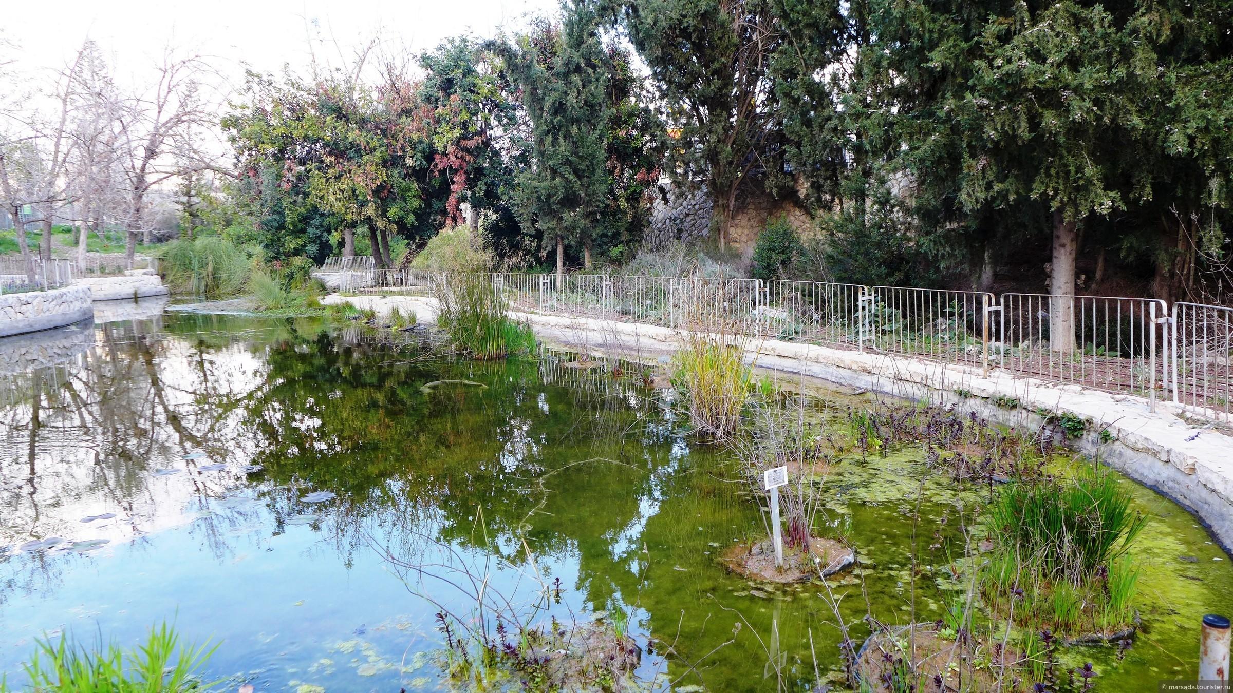 Ботанический сад - Блог про Израиль