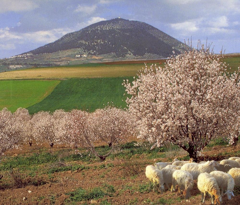 Гора фавор. Блог про Израиль