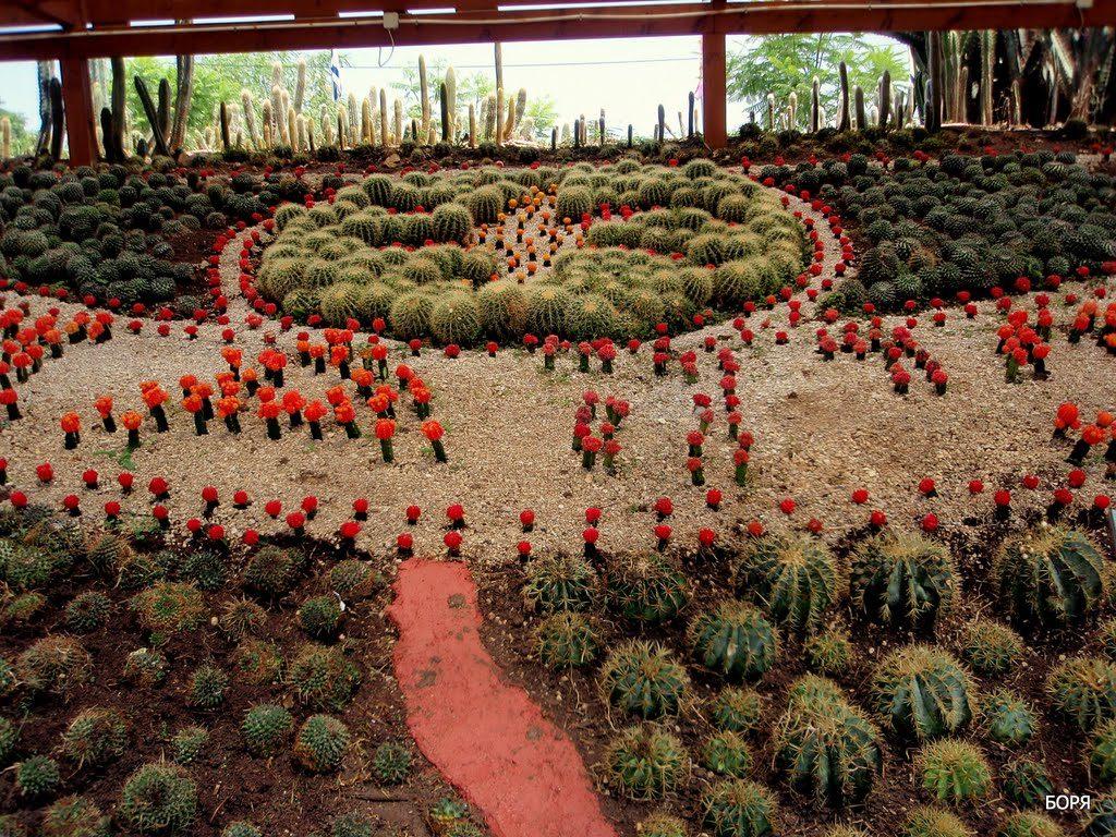 Кактусы в парке Утопия - Блог про Израиль