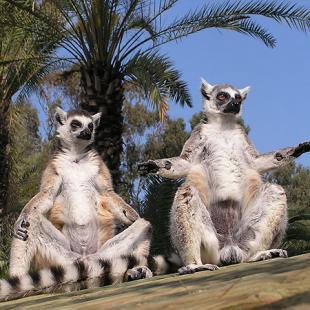 Зоопарк - Блог про Израиль